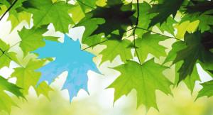 Fiabe Brevi Inventate: La Foglia Azzurra